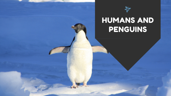 HUMANS AND PENGUINS
