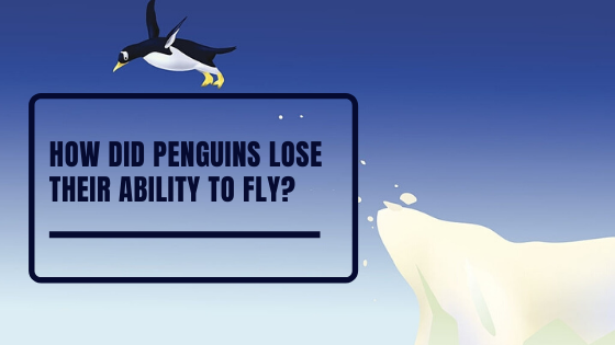 How did penguins lose their ability to fly